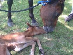 A Beautiful Healthy Mare and Foal
