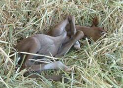 Our New Foal