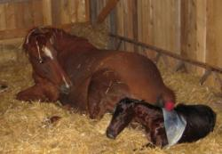 Another Successful Foaling